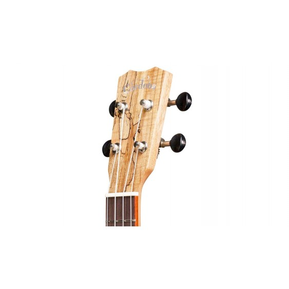 Cordoba Model 24C Concert Acoustic Ukulele, Spalted Maple Blem #N255